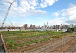 rooftop-farm-in-brooklyn