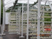 The VertiCrop food wall is installed with its first crop