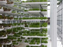 Vertical Farming System 1