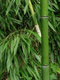 Bamboo labeling isn't up for grabs, says the FTC