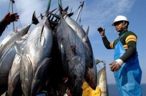 Bluefin -Tuna.2