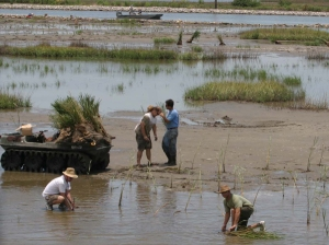 Volunteers help plant and restore a salt marsh in Lafourche Parish, Louisiana