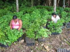 Planting Empwerment's sustainable reforestation project