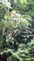 Tropical rainforest pic