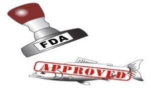 GMO Salmon - FDA approved