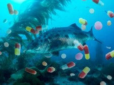 Pharmaceuticals and fish