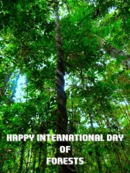 International Day of the Forest poster