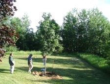 Archanel Archive champion tree planting