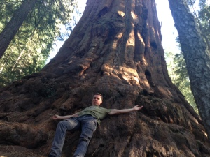 A 3,500 year old redwood discovered and cloned by Archangel