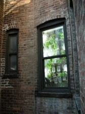 The Window Farm - a great example of vertical gardening, photo by Britta Riley, flickr