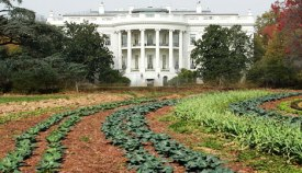 The soil in the White House children's community garden had been contaminated by toxic pesticides