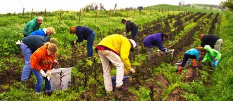 Cropmobster produce gleaning  with Petaluma Bounty, photo by Gary Cedar, courtesy of CropMobster