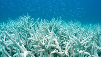 The Coral Restoration Foundation is helping to restore the reefs off the Florida coast