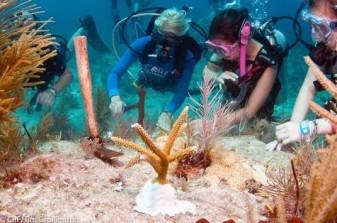 Coral Reef dive 1