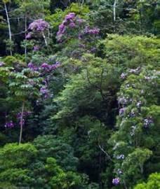 Brazill's Atlantic Rain Forest 1