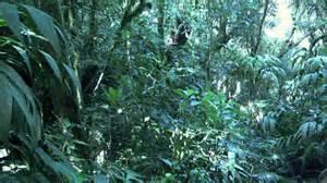 Brazill's Atlantic Rain Forest 2