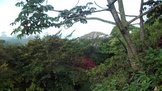 The Costa Rican rainforest, photo by Debra Atlas