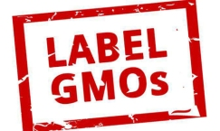 GMO graphic