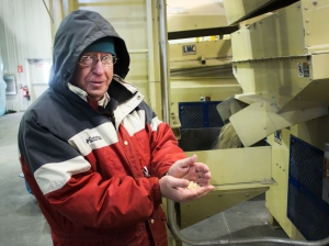 Lynn Clarkson founded Clarkson Grain, which accepts only non-GMO grain. Photo by Dan Charles, NPR