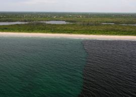Disaster from polluted release from Lake Okeechobee into Floirda lagoons