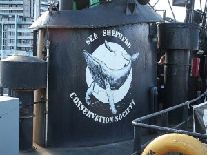 Sea Shepherd Conservation Society pic