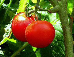 Ford and Heinz work to create sustainable materials from tomato waste