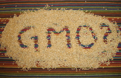 GMO rice graphic
