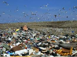 Landfill pic