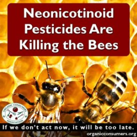 Bees-exposed-to-systemic-pesticides-are-unable-to-gather-enough-pollen-neonicotinoids-kill-honeybees