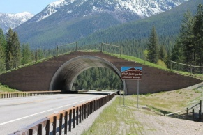 Animal bridge in Montana
