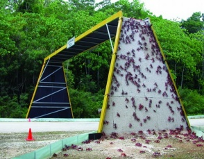 An unusual animal bridge: Red crabs climb over an overpass to cross a road on Christmas Island during their migration. (Christmas Island National Park, Australia)