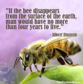 Bee collapse statement, Einstein