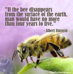 Bee collapse statement, Einstein