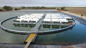 Infratech's floating solar array at a water treatment plant in Jamestown, South Australia