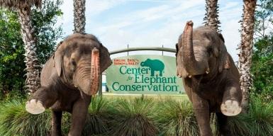 Elephants & Ringling Bros. CEC