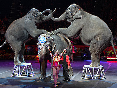 Ringling Bros Circus elephant act
