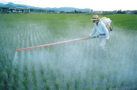 Consumers should be concerned that the toxic chemical glyphosate, shown here being sprayed on crops, is being found in places we really don't want it to be