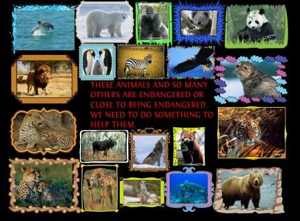 Endangered Animals graphic