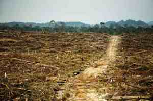 Palm oil deforestation, photo courtesy of Rainforest Action Network