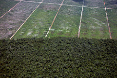 Palm oil plantation and deforestation likely caused by Indiofood partner, photo by Wakx, flickr