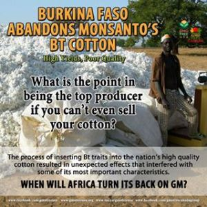 Burkina Faso + Bt cotton graphic