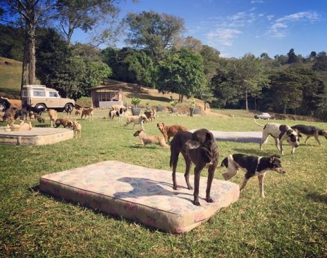 Mattresses are provided for the dogs to lounge on throughout the day, Photo courtesy of Territorio de Zaguates