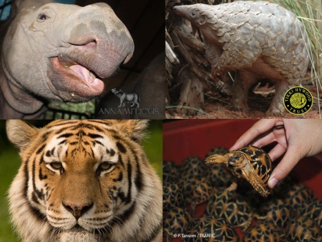 Wildlife Trafficking - fighting it